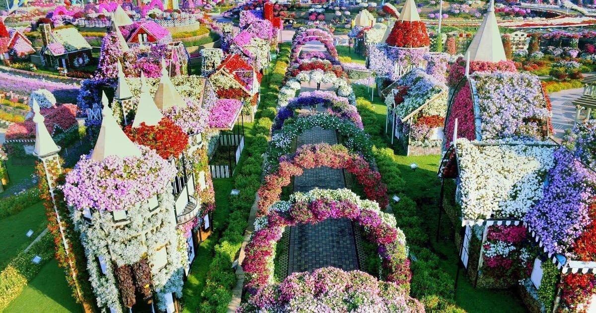 Сад чудес Дубая — крупнейший цветочный сад планеты