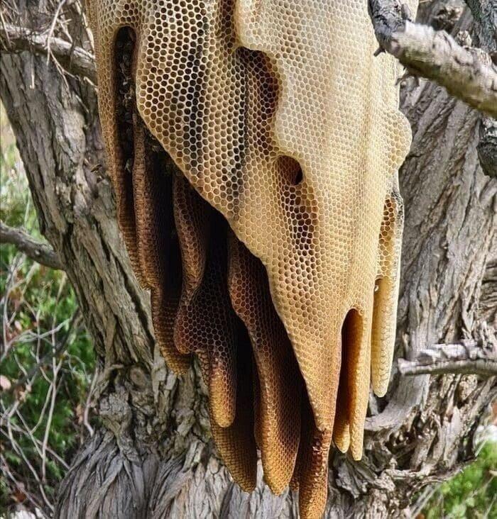 Как пчелы строят такие ульи