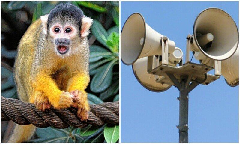 Обезьяны предпочитают шум машин звукам природы