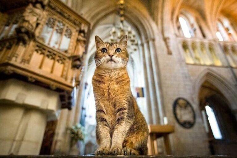 Умерла кошка, жившая в соборе Святой Софии