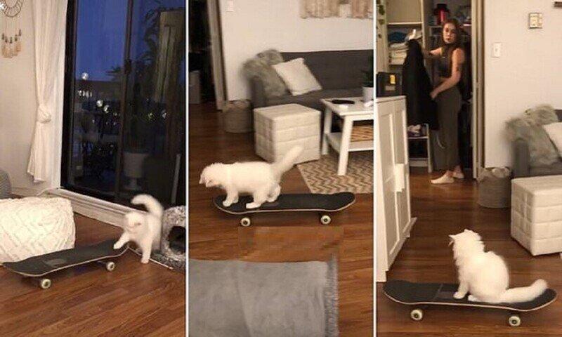 Кошка-скейтер стала звездой инстаграма