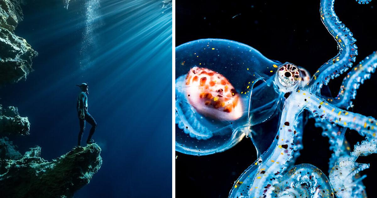 Названы финалисты конкурса Ocean Photography Awards 2020
