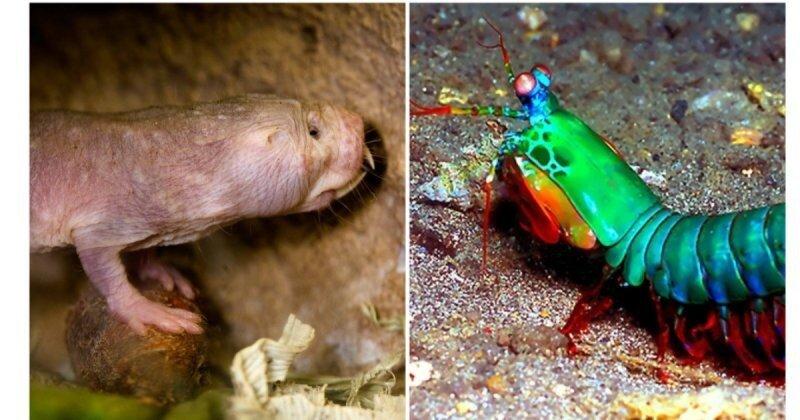 7 существ, которых природа наделила сверхспособностями
