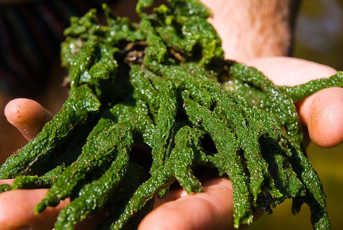 Бадяга: Разрыв шаблона. Это животное, а не растение. Но почему зелёное? Почему не двигается?