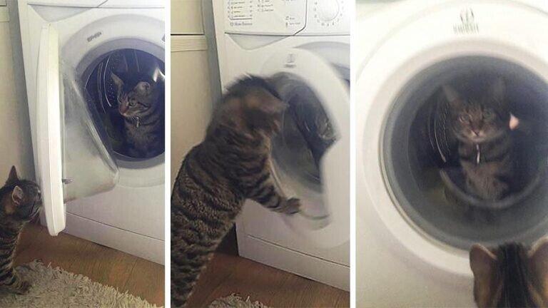 Кот закрыл кошку в стиральной машине