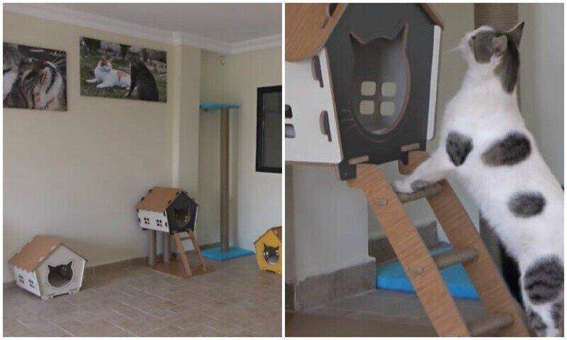 Мужчина переделал комнату в доме для бездомных котеек