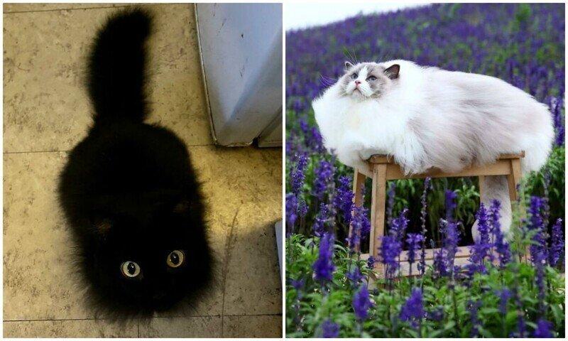 Его величество кот: 30 пушистых котеек, которые своруют ваше сердце