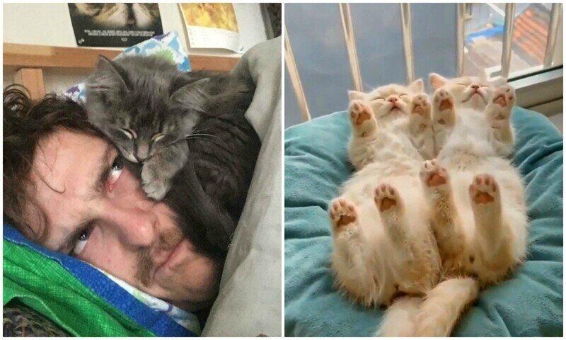 Что за прелесть: спящие котейки, которыми можно умиляться часами