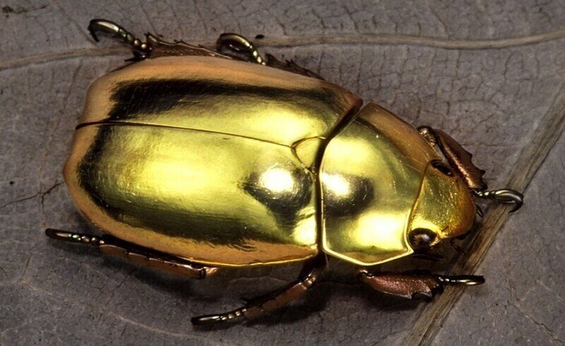 Как золотые жуки помогают физикам