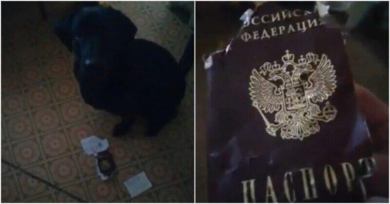 Мужчина не купил своей собаке косточку и пожалел об этом