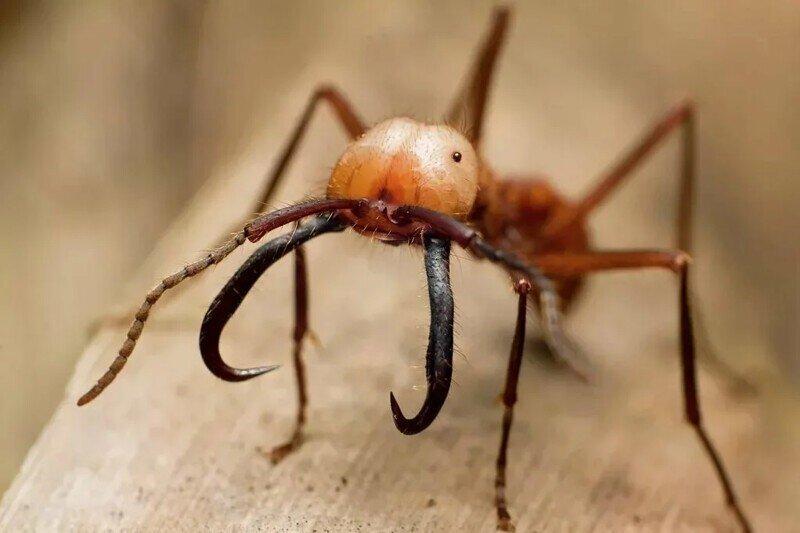 Птицы научились ловко использовать «Реку смерти» из тысяч муравьёв, сметающих всё на своем пути