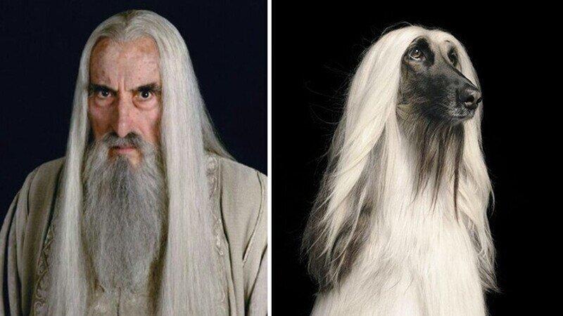 """Как выглядели бы персонажи """"Властелина колец"""", будь они собаками"""