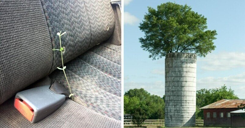 16 случаев, когда растения появились там, где их совсем не ждали