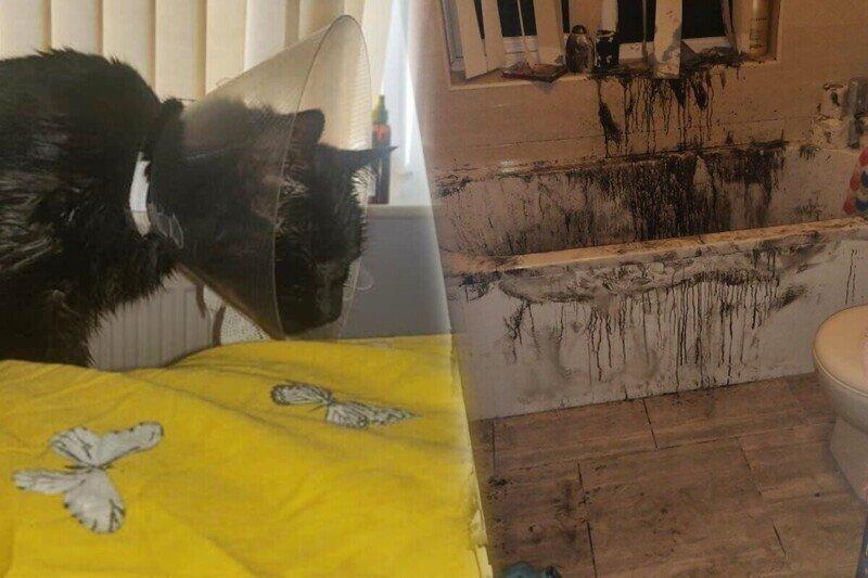 Мужчина выпустил котика на прогулку, а вместо него вернулся настоящий монстр