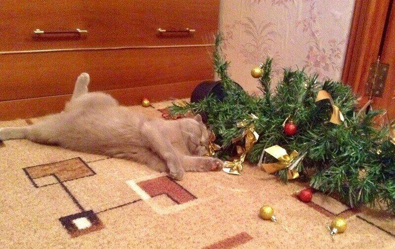 Почему коты так любят портить рождественские ёлки?