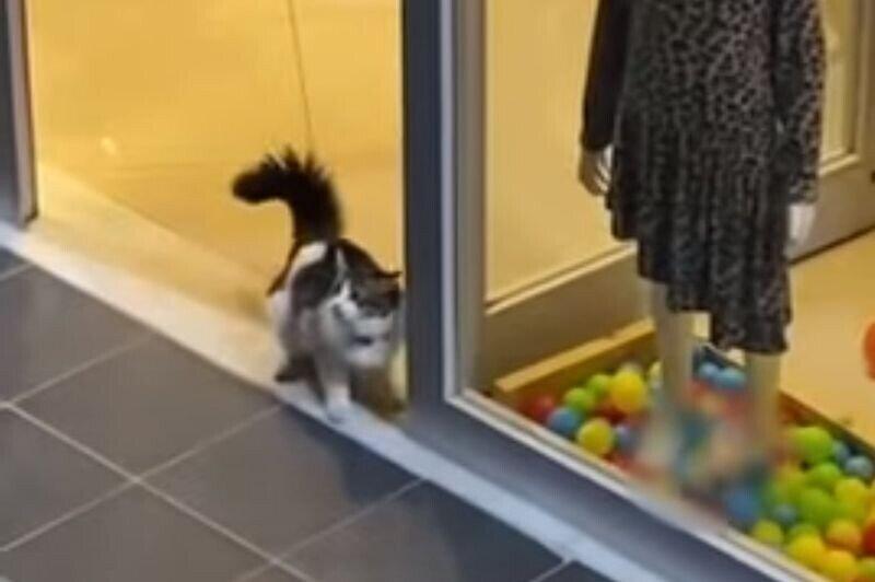 Озорная кошка забежала в магазин, чтобы поиграть с украшавшими витрину шариками