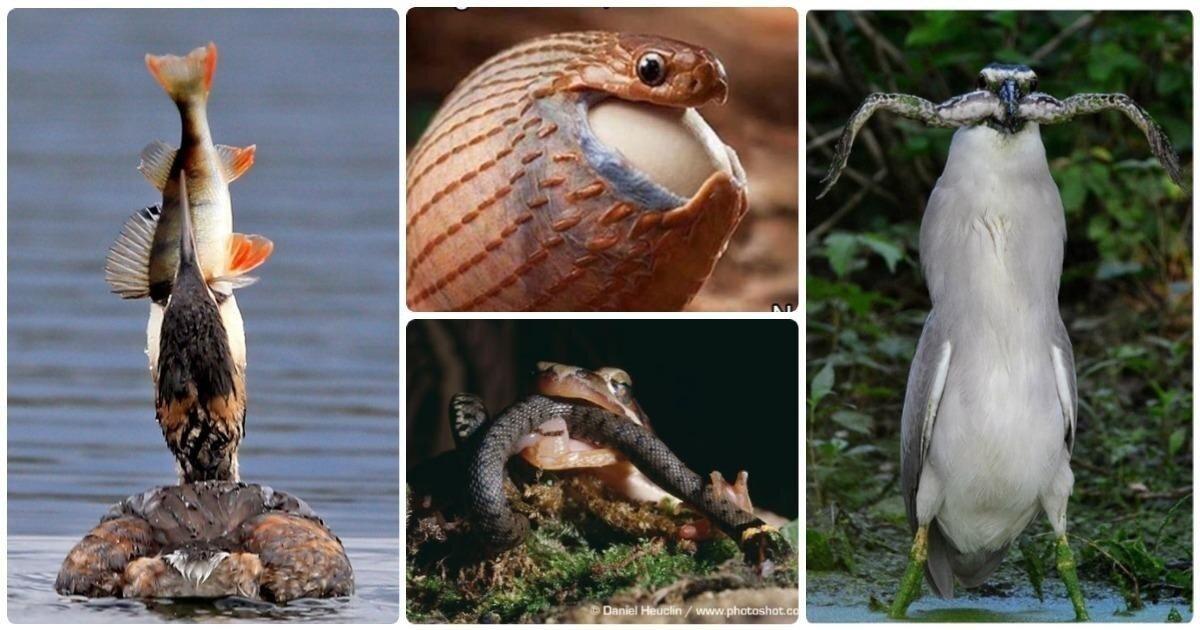 Впихнуть невпихуемое: 25 примеров жадности в природе
