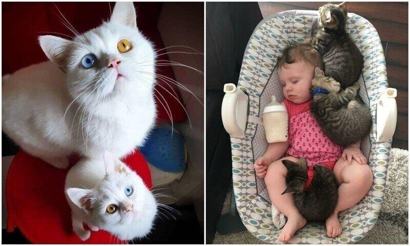 35 трогательных фото с кошками, которые согреют душу