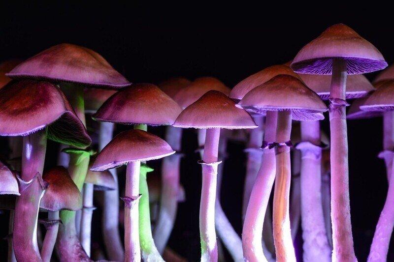 Американец хотел полечиться волшебными грибами, а те проросли в его венах