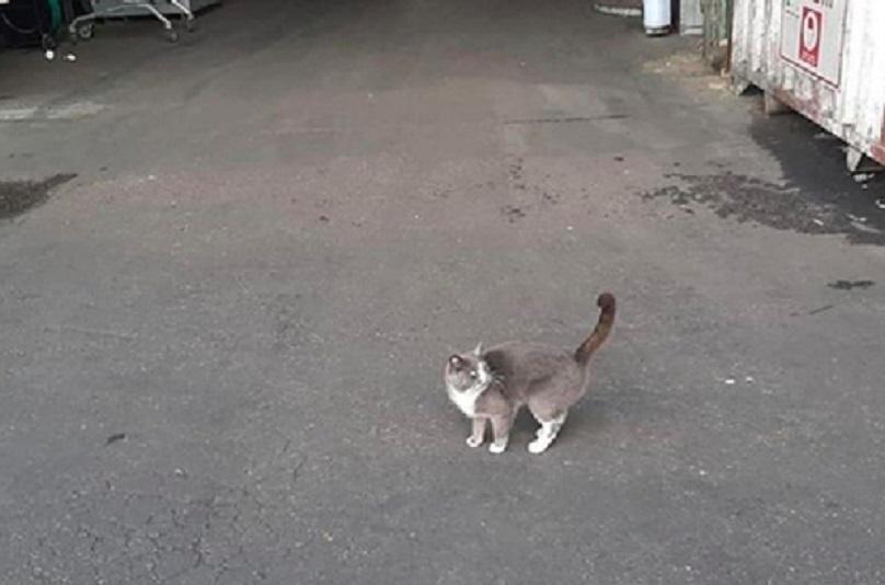 Одесская кошка три недели ела конфеты в закрытом контейнере, пока не доплыла до Израиля