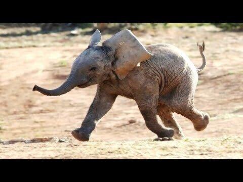 Дикие животные, которые существуют на Земле дольше людей