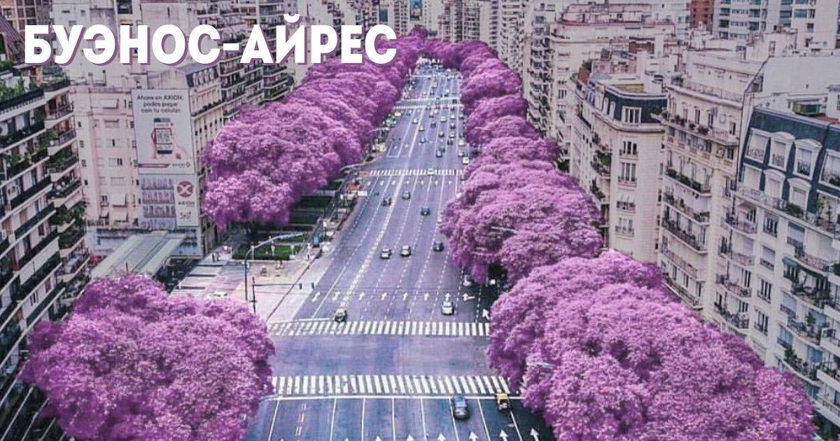 Буэнос-Айрес в цвету. Сезон жакаранды