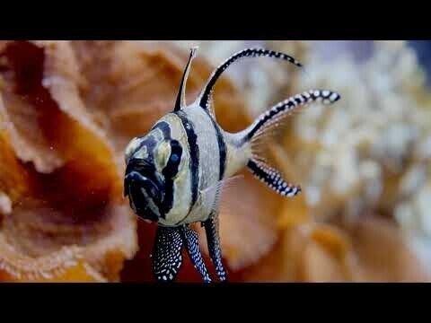 Рыбки в аквариуме, в море, в воде