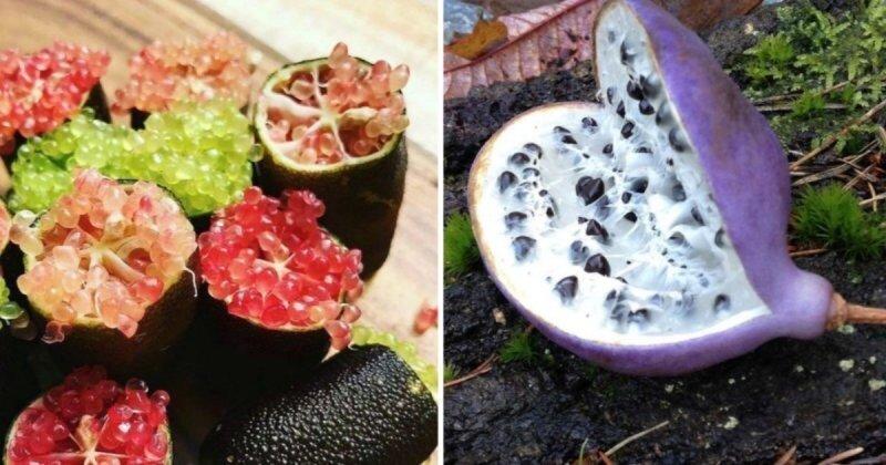 10 редчайших экзотических фруктов, о которых мало кто знает