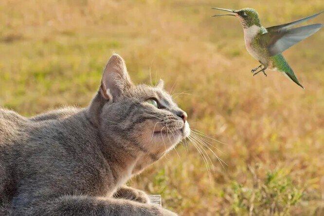 Почему кошки «стрекочут», когда видят птиц