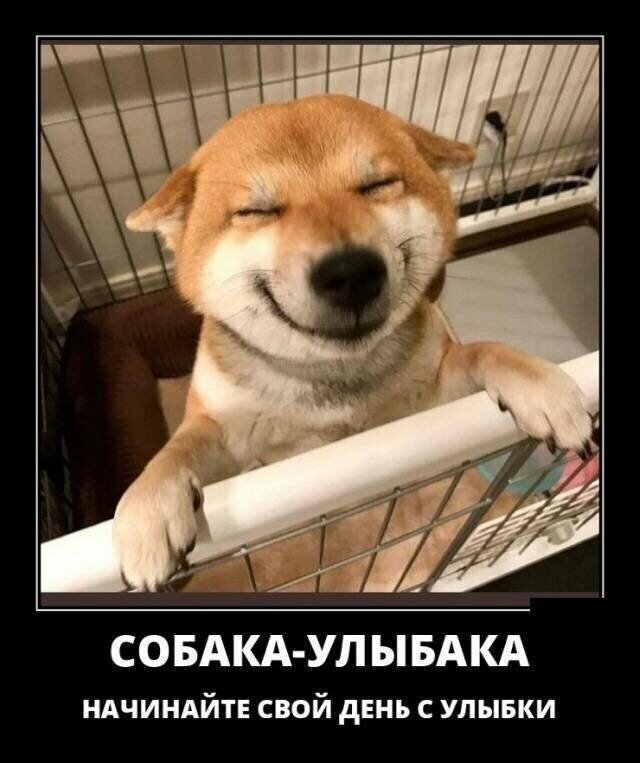 Собачьи демотиваторы