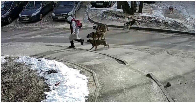 В Воронеже на школьницу напала стая бродячих собак