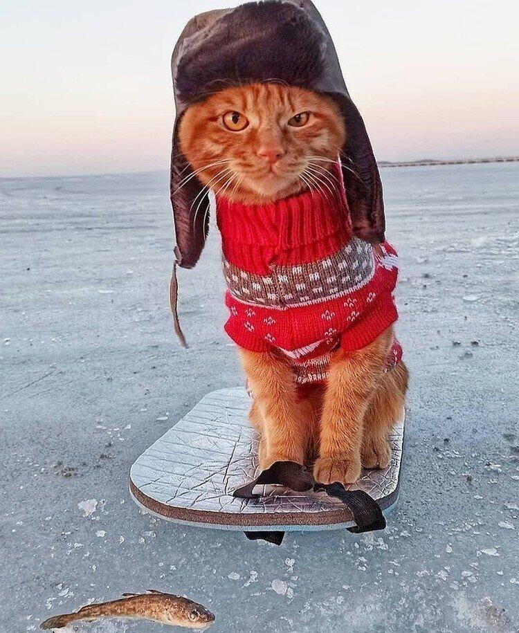 Рыжий кот Симба в шапке-ушанке, сопровождающий хозяина на рыбалке, умилил соцсети!