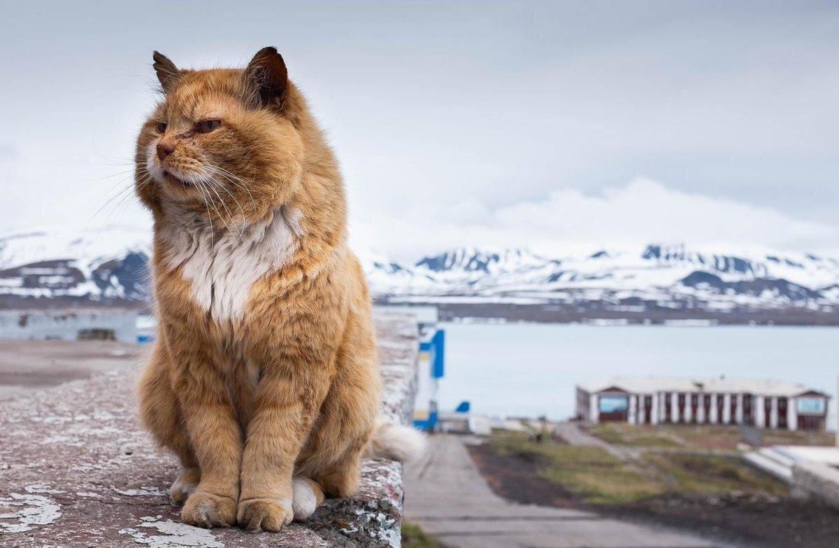 Умер кот-песец Кеша, необычный житель Шпицбергена