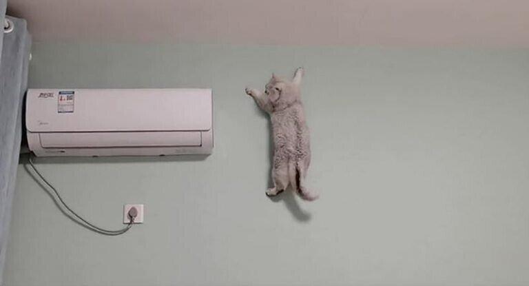 Кошка карабкается по стене, как профессиональный альпинист