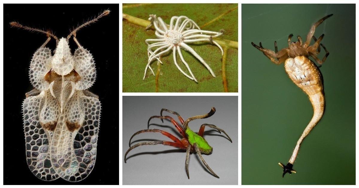 20 удивительных насекомых и пауков, в существование которых сложно поверить