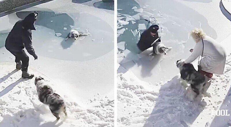 Мужчина провалился под лёд, спасая тонущего пса