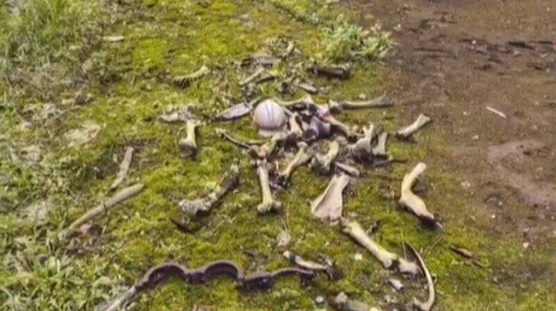 В чернобыльской зоне отчуждения нашли таинственную кучу костей