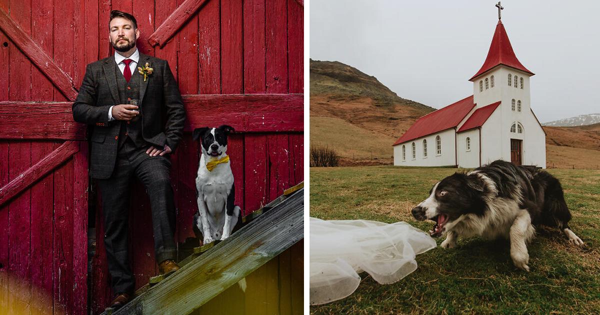 19 собачьих финалистов конкурса на лучшее свадебное фото