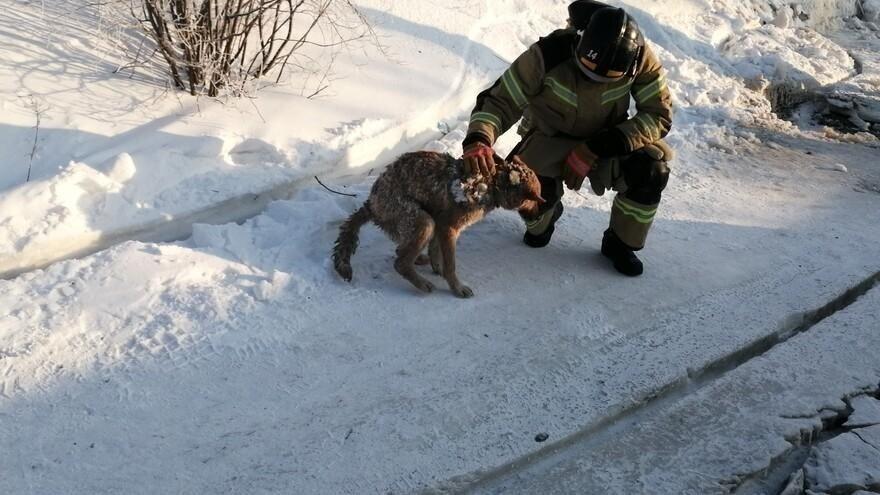 Через 2 дня спасатели вернулись на место пожара и отколупали чудом уцелевшую в огне собаку от глыбы льда