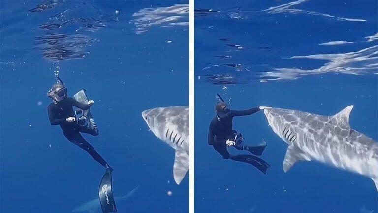 Как следует отбиваться от акулы-убийцы