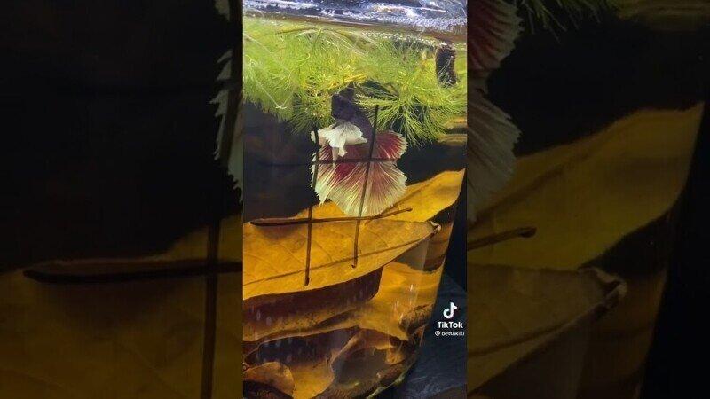 Девушка сыграла в крестики-нолики с рыбкой