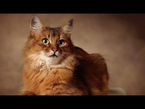 День кошек отмечают в России
