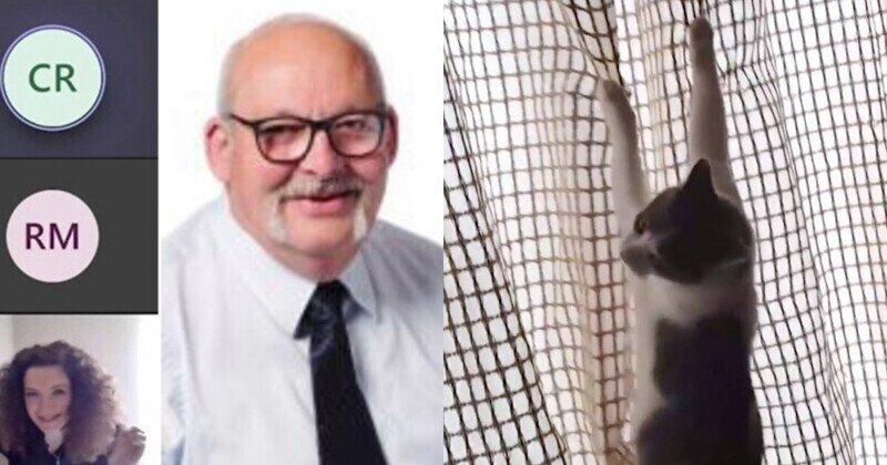 """""""Какого *** ты собираешься делать?"""": чиновник обматерил кота в прямом эфире видеоконференции"""