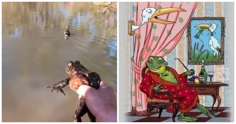 Неожиданный финал охоты птицы на лягушку
