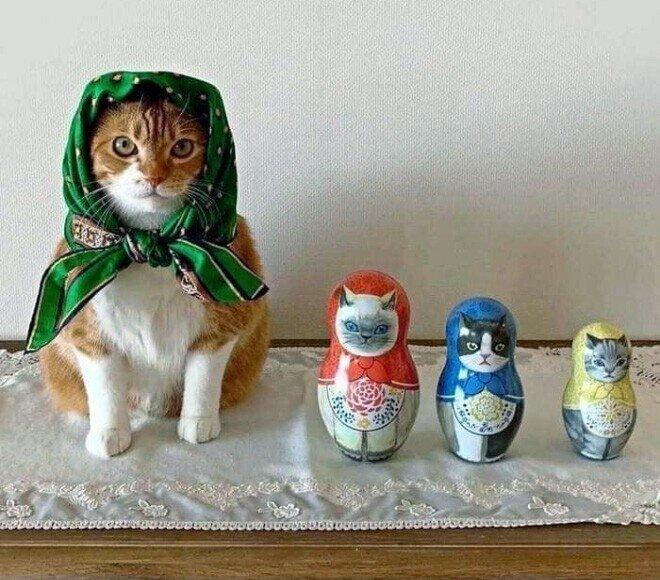 Кошки, которым платочек к лицу, то есть к усам