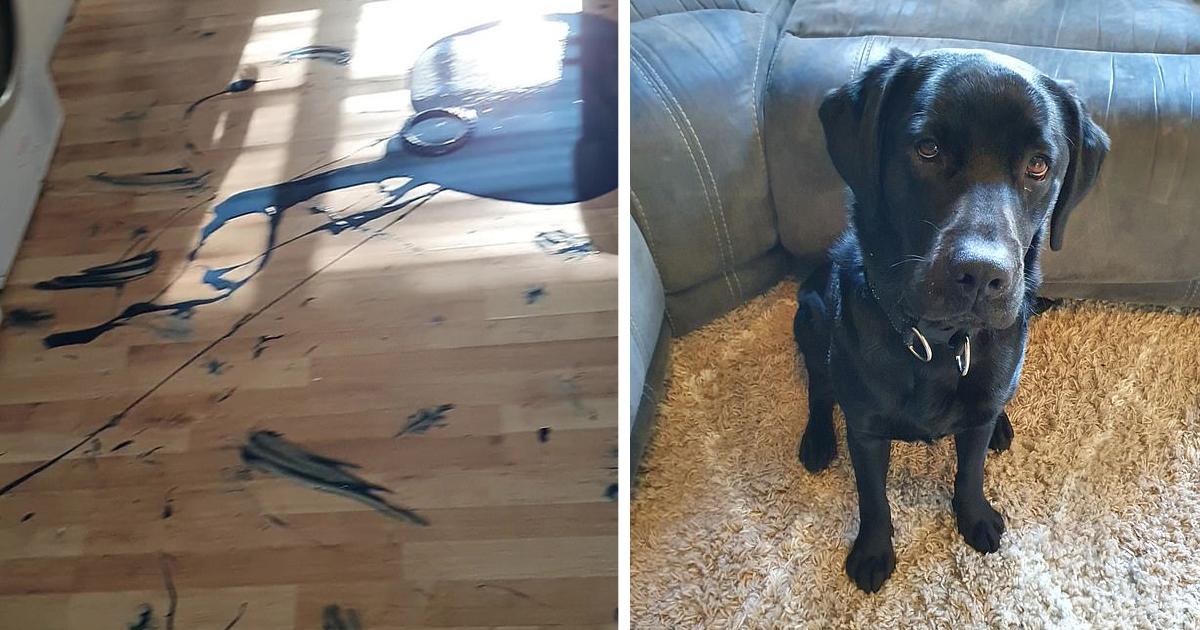 Хозяйка «самого невоспитанного пса в Британии» показала, как он разнес дом за две минуты