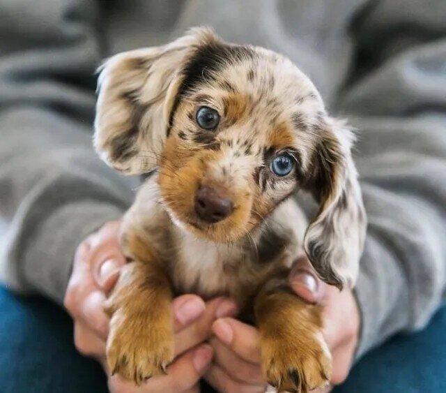 15 щенков, которые вызовут у вас умиление