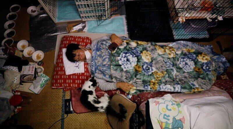 """Японец остался жить рядом с """"Фукусимой"""" ради чужих кошек"""