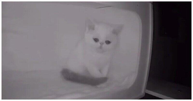Котенок не смог сдержать слез, когда остался один в приюте