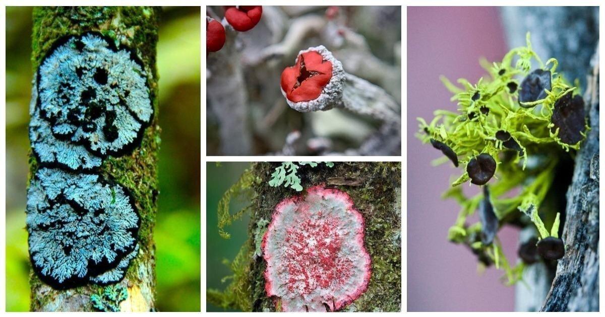 Красота в мелочах: 20 невероятных фактов о лишайниках